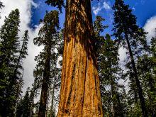 Národný park Sequoia, California