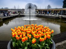 Expozícia kvetín, Keukenhof, Holandsko