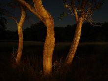 Stromy v noci