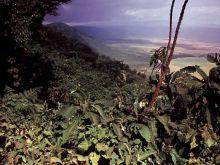 Pohľad do krátera Ngoro Ngoro.